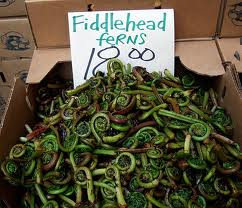 Fiddlehead ferns.jpg